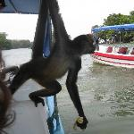 monkey on the isleta tour