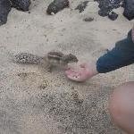 la spiaggia con gli scoiattoli