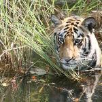 Foto de Kanha Jungle Lodge