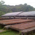 Lagerung und Trocknen der Kakaobohnen