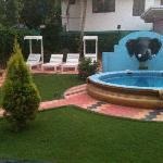 lawn & pool