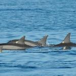 Il bagno con i delfini