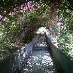 Flower Tunnel walk to beach