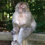 Danke Gott, dass ich kein Affe bin...