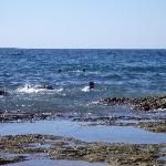 Latakia in summer