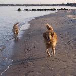 Auch unsere Hunde fanden es toll