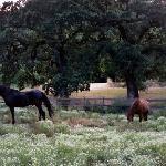 Equine Residents at Kenwood Oaks
