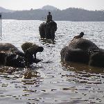 Elephant Santuary (these are wild elephants)