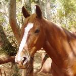 One of our beautiful horses, Sierra.