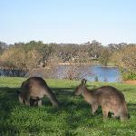 Weston Park - Canberra