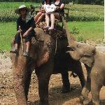 Elephant riding during a tour which the hotel had booked for us