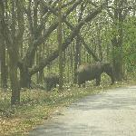 few other elephants in the wildlife sanctuary