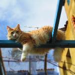 Cool cat !