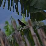 birds arpund hotel