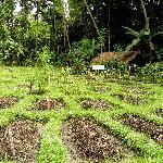 Organic farming on Bali_Jiwa Damai