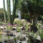 Moir Gardens