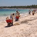 Die Strandreinigung