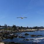 Monterey Bay - La costa a sud di Monterey