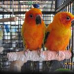 Beautiful birds in the gift shop