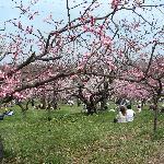 札幌市平岡梅園
