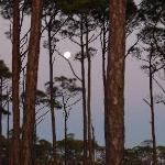 Full Moon in trees - St. Joseph Peninsula State Park