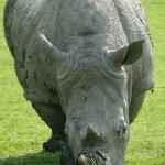 rhino on the VIP safari tour