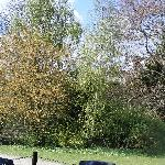 mature trees in farmhouse garden