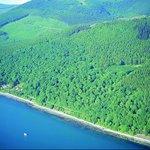 Rostrevor Forest Kilbroney