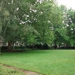 Grassy open area