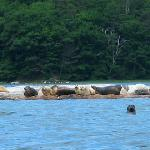 Seals on Muscongus Bay