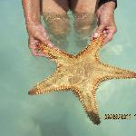 starfish at the landbar