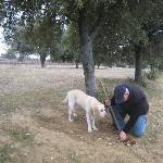 Recherche des truffes