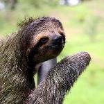 Friendly sloth