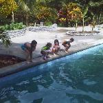 Pool & Terraza area