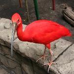 Mean bird