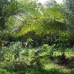 giardino posada
