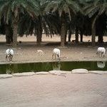 Arabian Wildlife Center
