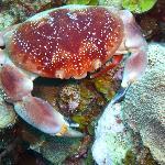 A nice crab