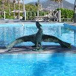 Wonderful Pelican Bronze at pool
