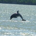 Dolphin jumped as we watched from our pontoon boat