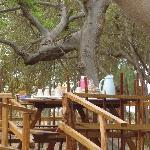 petit déjeuner dans les arbres