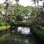 Klong within the gardens