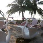 Plastic swans