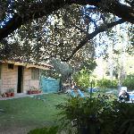 Jardin con rama de olivo