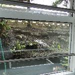 wiew from window