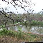 View from Cabin 2 looking over left half of pond.