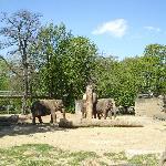Zoo - Elephants