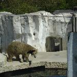 Zoo - Polar Bear