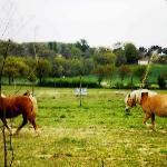Gli splendidi cavalli