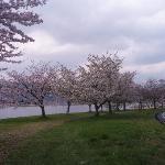 まだ桜が楽しめた!